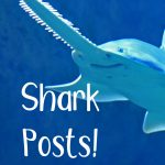 Shark Posts!