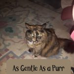 As Gentle As a Purr