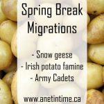 Spring Break Migrations