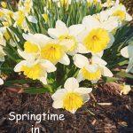 Springtime in Small-Town Ontario