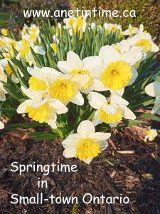 springtine in small-town ontario