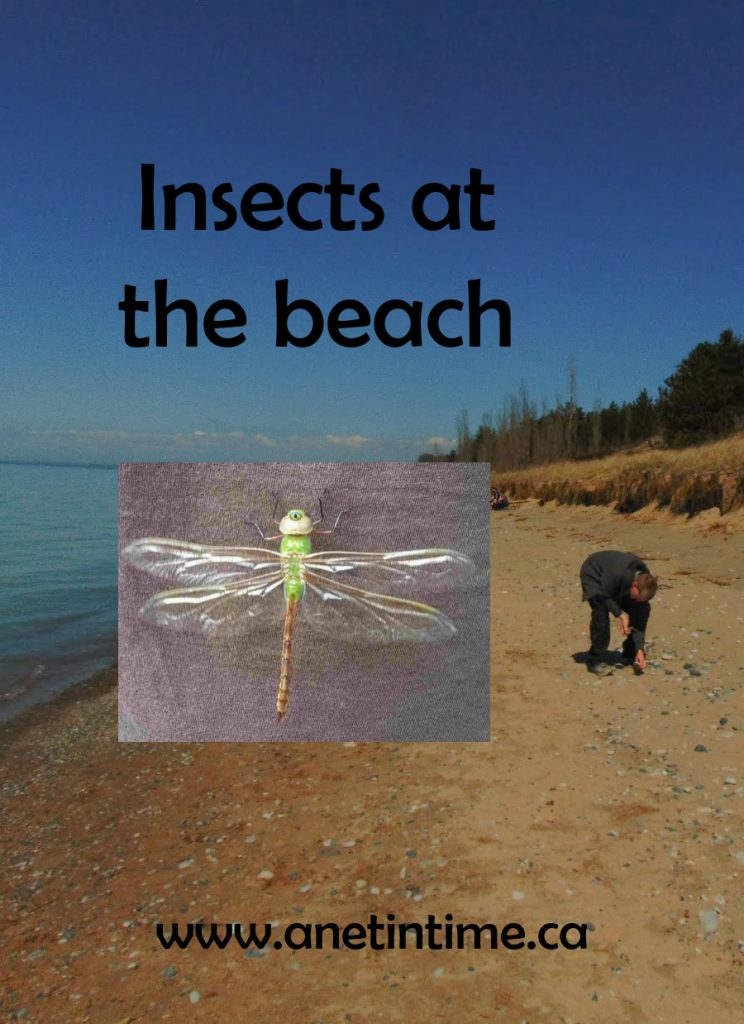 insects at the beach