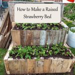 How to Make a Raised Strawberry Bed