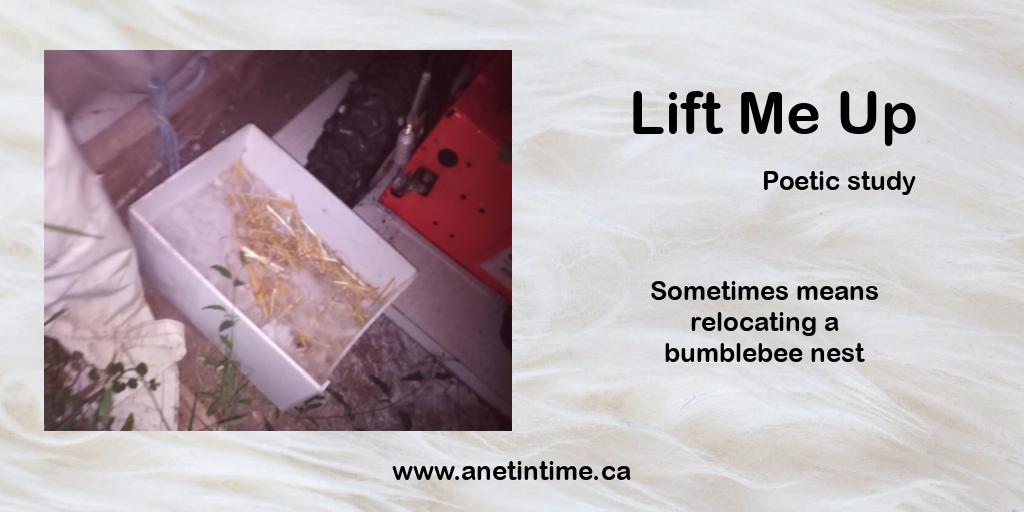 lift me up, bumblebee nest