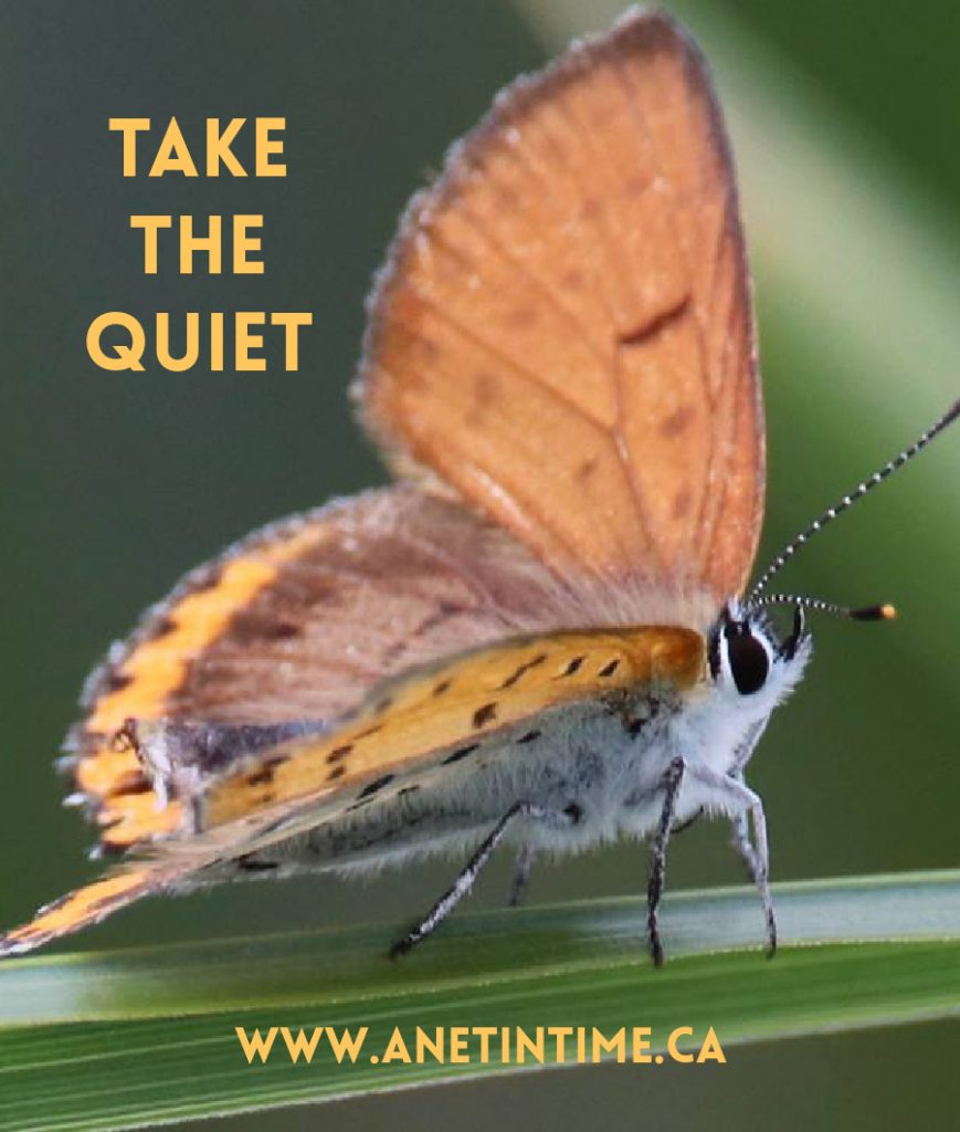 Take the quiet, text with an orange moth